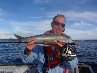 Swansea Salmon
